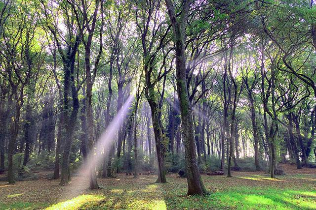 bosco-paliano-area